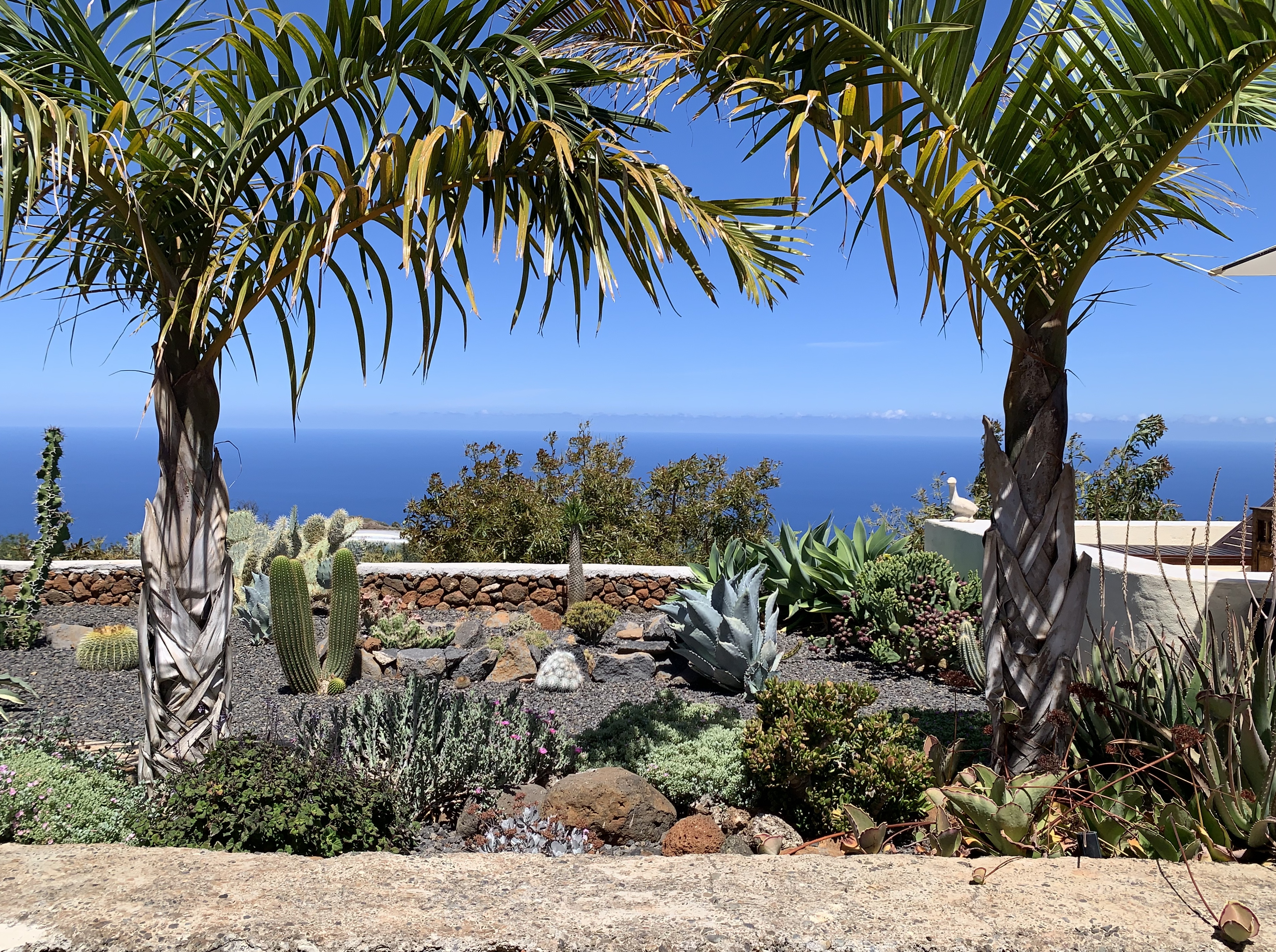 El jardín de cactus en el medio.